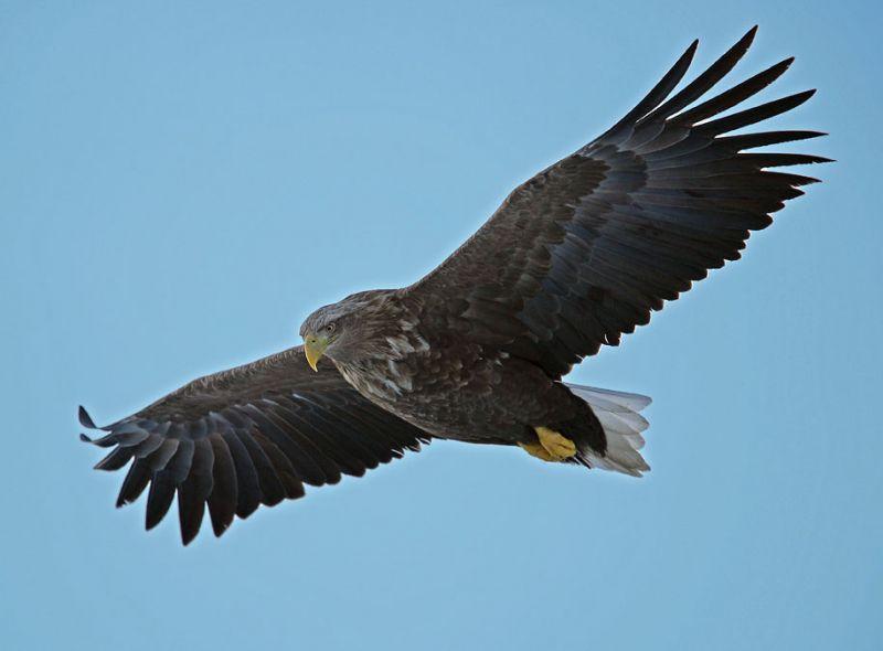 хищные птицы Ростова-на-Дону